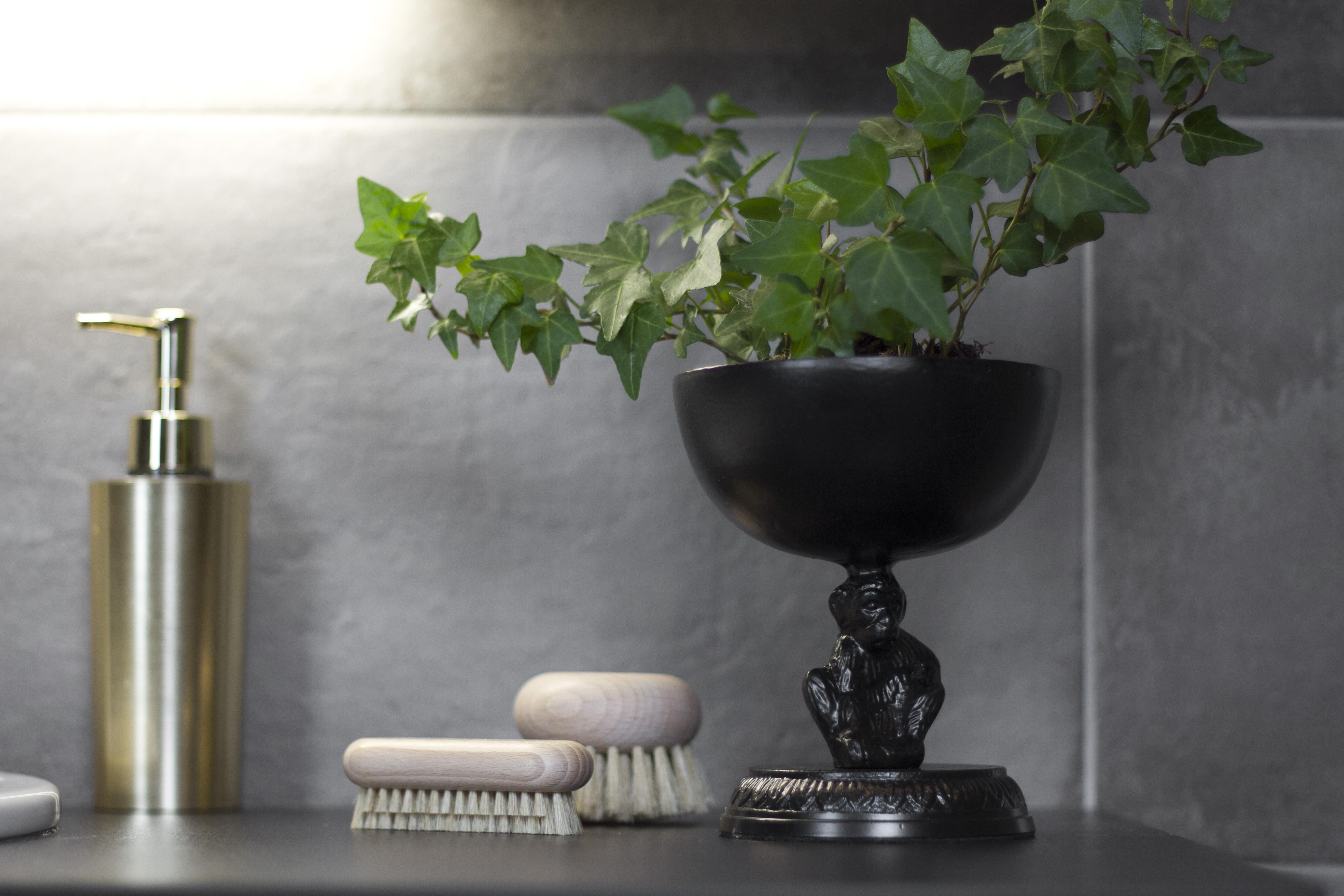 murgröna bäst för inomhusluften