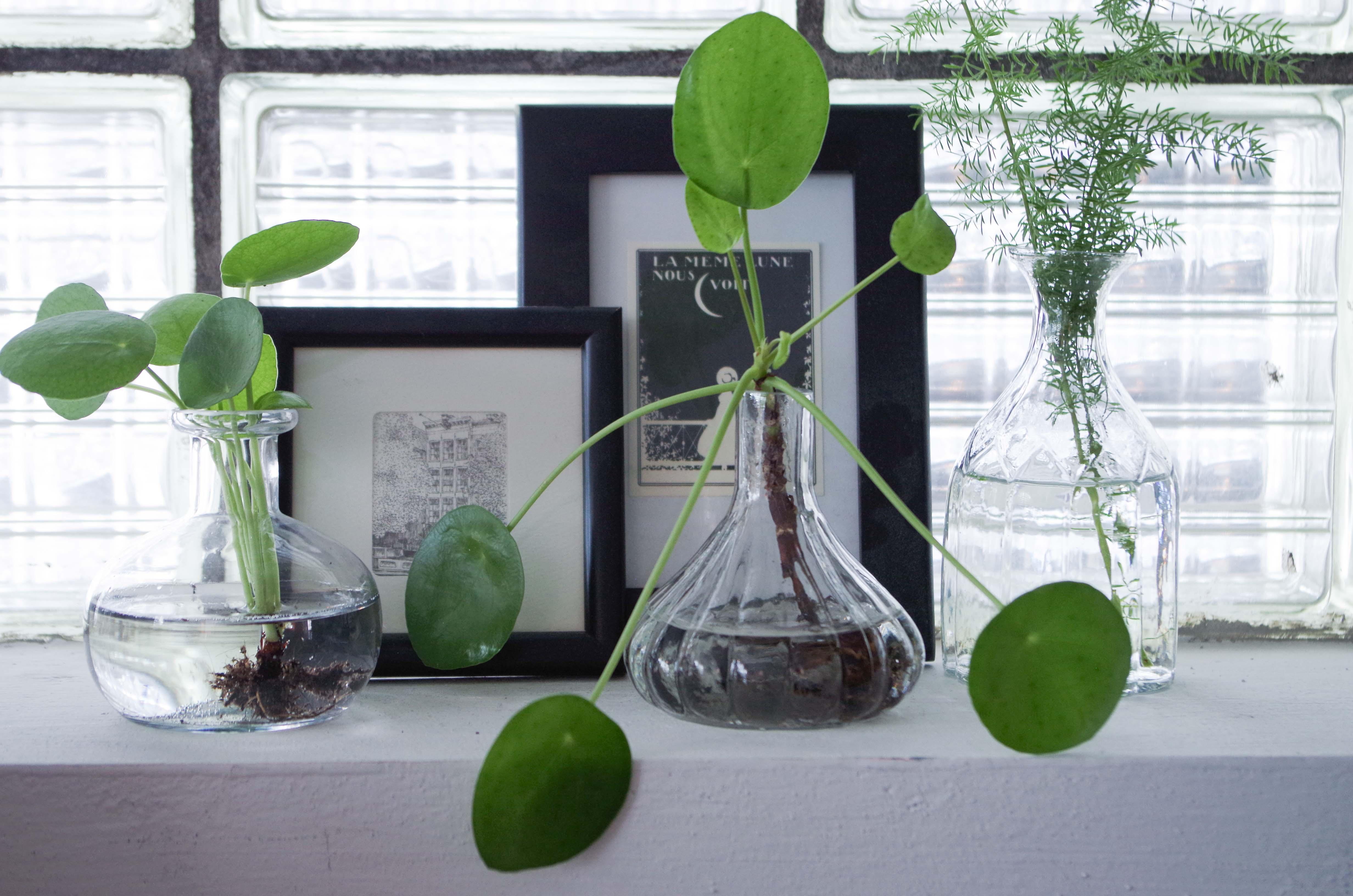 Presenttips till växtnörden