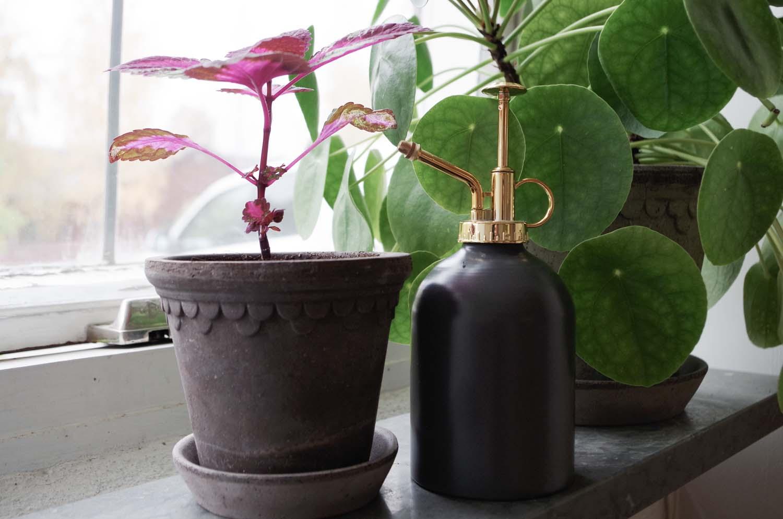 duscha växt