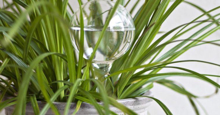 Tips för att växterna ska överleva semestern