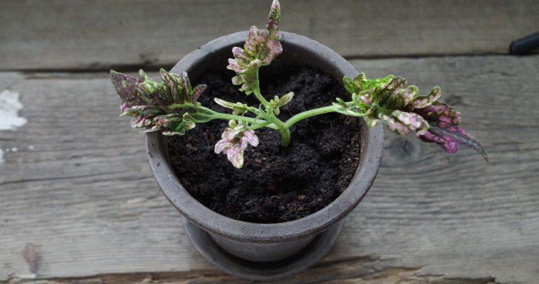 Shoppa växter på Tradera