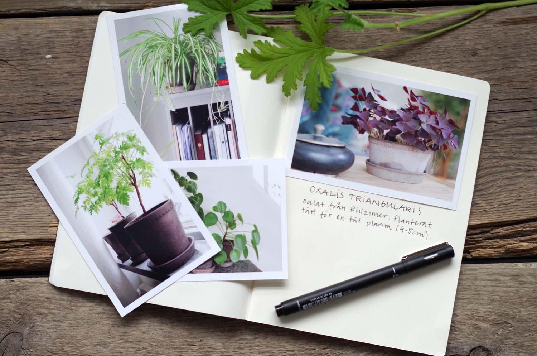 växtdagbok
