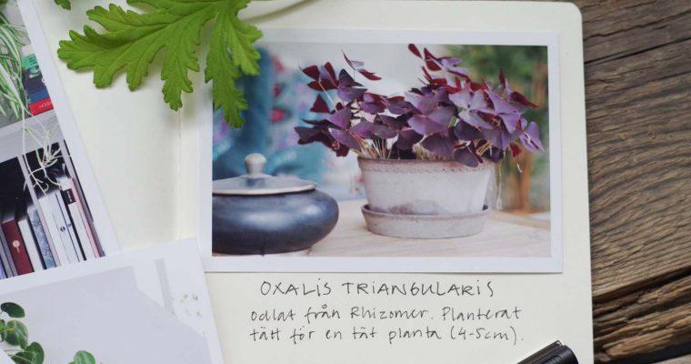 DIY – Gör din egen växtdagbok