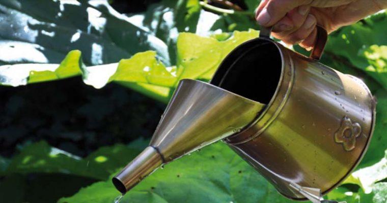 Snygga vattenkannor som tål att tittas på