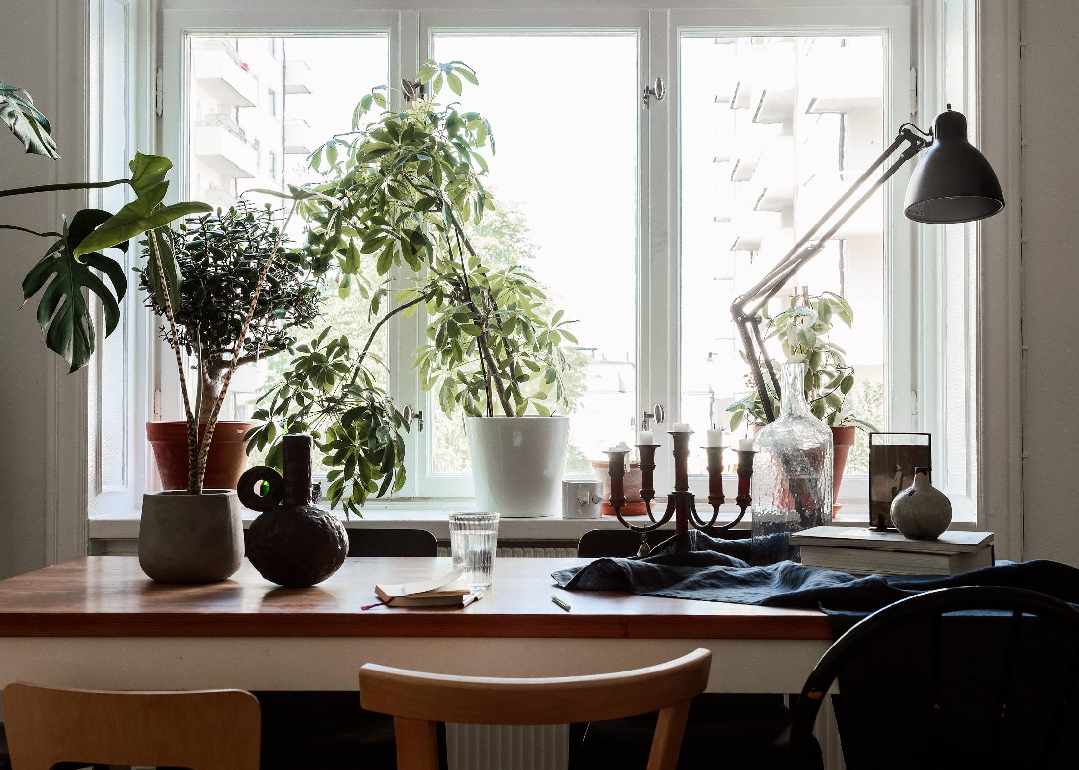 Fint i fönstren – stora fönster kräver högre växter