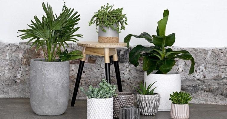 Ska man ha växter i sovrummet?