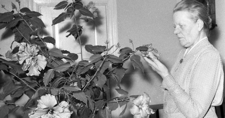 Hibiskus – Min nya växtkompis!