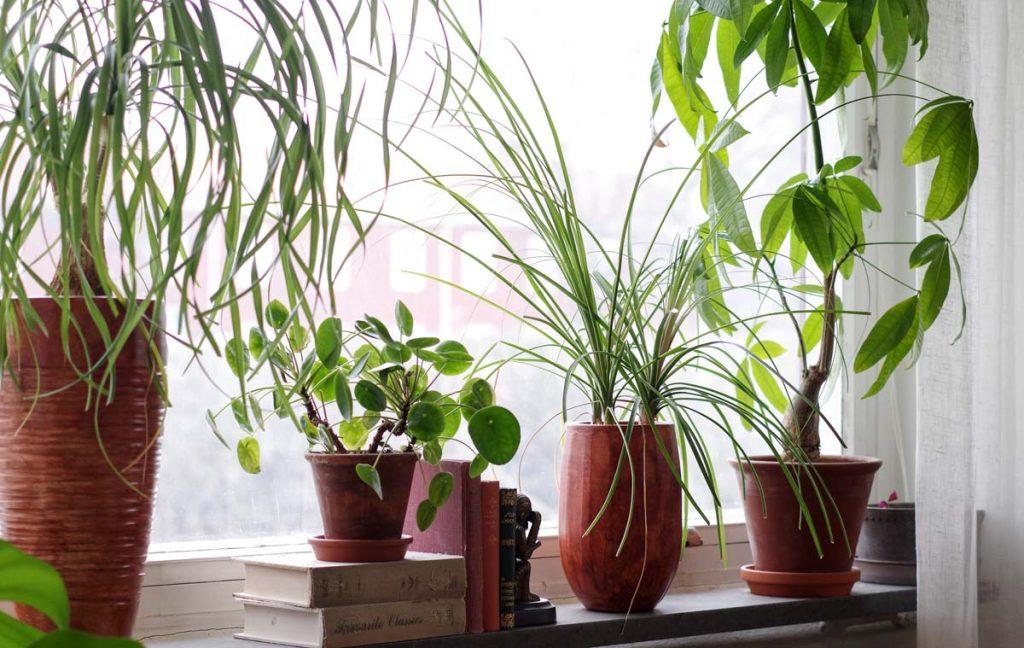 Växter som tål stark sol