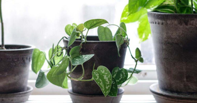 Min växtgardin – en uppdatering