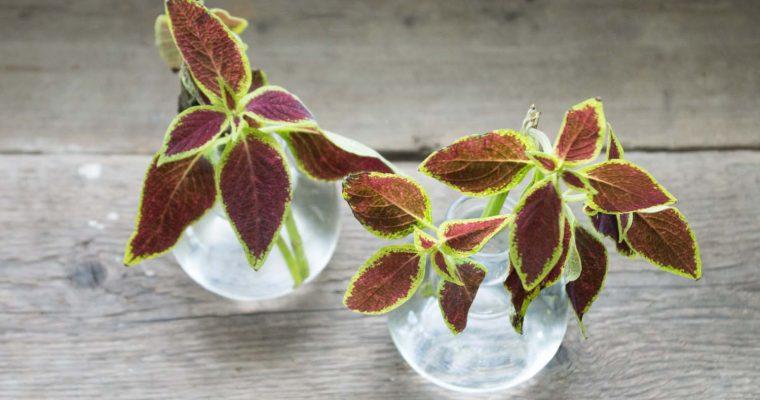 Ta med sig växter från utlandet – är det ok?