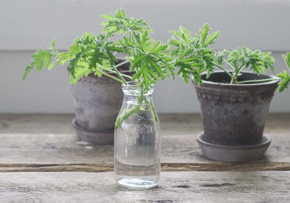 Växter bra för den psykiska hälsan