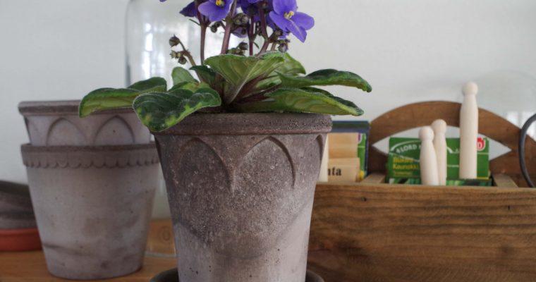 Trendiga växter – En titt i spåkulan!